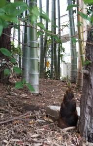 やなぎの森のタケノコ